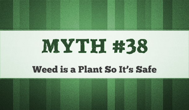 is marijuana plant safe